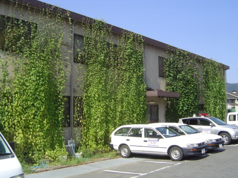 グリーンカーテン市役所